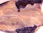 SALTED COD FISH -- OPEN (Sold by the Pound)